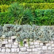 Green park wall — Stock Photo