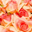 Roses — Stock Photo #2467608