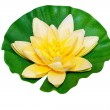 Stock Photo: Water lily isolated