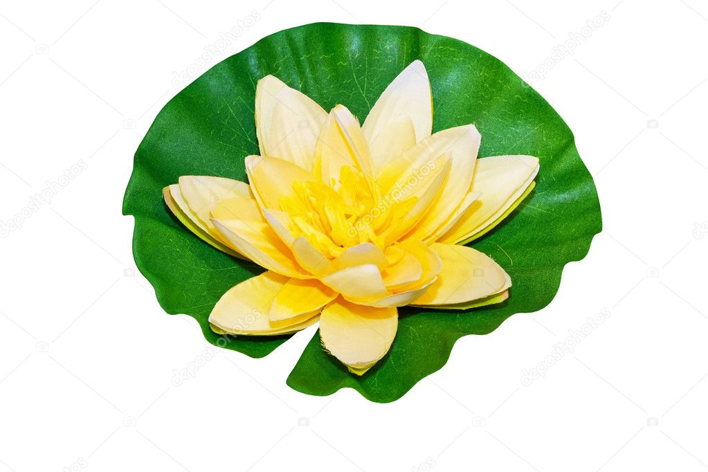 Yellow water lily isolated included clipping path — Stock Photo #2471602