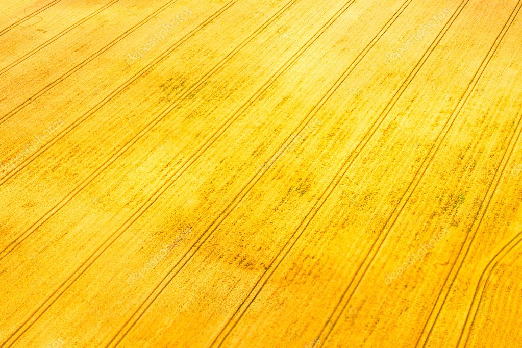 Agricultural Crops Images Agriculture Crops Field
