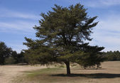 Golf Course Tree — Stock Photo