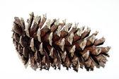 Single Isolated Pine Cone — Stock Photo
