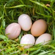 Stock Photo: Five eggs on green grass