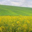 Agricultural plains — Stock Photo