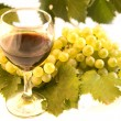 Stock Photo: Wine and grape
