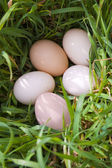Five eggs on green grass — Stock Photo