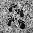Stock Photo: Footprints in Snow 1
