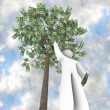 the money tree - it does grow on trees — Stock Photo