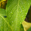 Foto de Stock  : Green and Yellow Leaves in Rain
