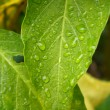 Stock fotografie: Green and Yellow Leaves in Rain