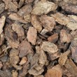 Western bark nuggets background — Stock Photo