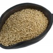 White quinoa grain — Stock Photo