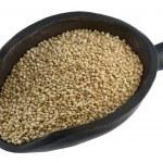 Scoop of quinoa grain — Stock Photo #2054599