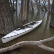 Canoe on lake with submerged forest - Stockfoto