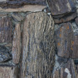 Petrified wood background — Stock Photo
