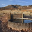 Cattle watering hole in Colorado — Photo