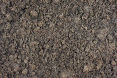 Composted steer manure background — Stock Photo