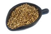 Scoop of hulled barley grain — Stock Photo