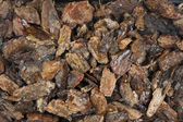 Damp western bark nuggets background — Stock Photo