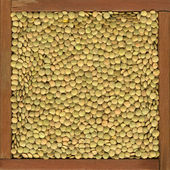 Green lentils background — Stock Photo
