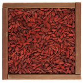 Tibetan goji berries (wolfberry) — Stock Photo