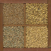 Wheat, barley, oat and rye grain — Stock fotografie