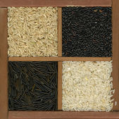 Four rice grains background — Stock Photo