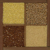 Millet. spelt, amaranth, quinoa grains — Stock Photo
