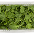 Green baby spinach in a clear box — Foto de Stock
