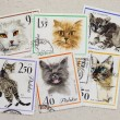 Cats, vintage post stamps from Poland — Stock Photo