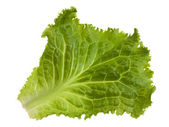 Green leaf of lettuce — Stock Photo