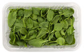 Green baby spinach in a clear box — Stock Photo