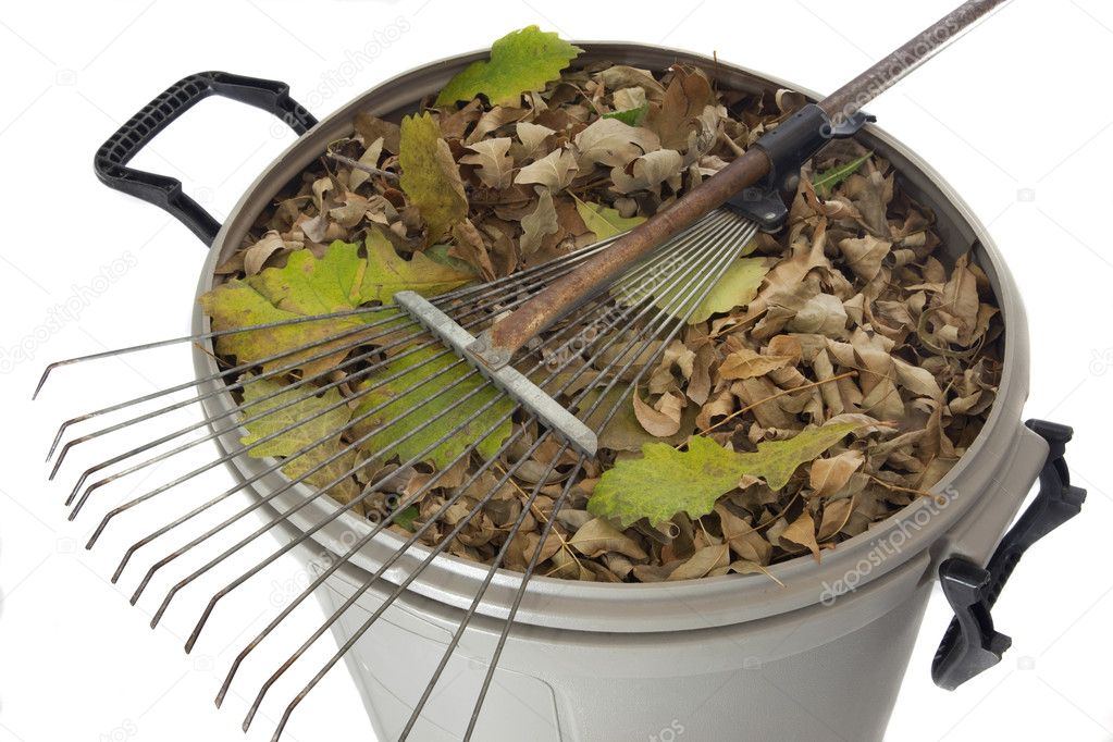 Old rusty rake and dry leaves in plastic garbage bin isolated on white - fall backyard work concept — Photo #2061919