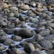 Dry river bed in winter - Stock Photo