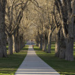 Allee with old American elm trees - the Oval at - Stock Photo