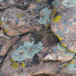 Stock Photo: Sandstone with lichen background