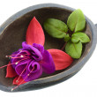 Royalty-Free Stock Photo: Fuchsia flower in a wooden scoop