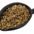 Scoop of spelt wheat berries — Stock Photo
