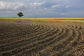 Field plowed after wheat harvest — Stock Photo
