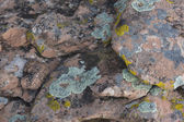 Sandstone with lichen background — Stock Photo