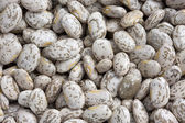 Pinto or mottled beans — Stock Photo