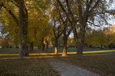 Alley with old American elm trees — Stock Photo