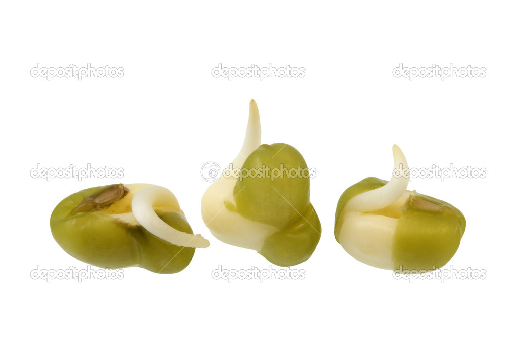 Three seeds of mung been sprouting, isolated with clipping path on white — Stock Photo #2434747