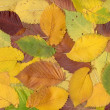 Stock Photo: autumn background