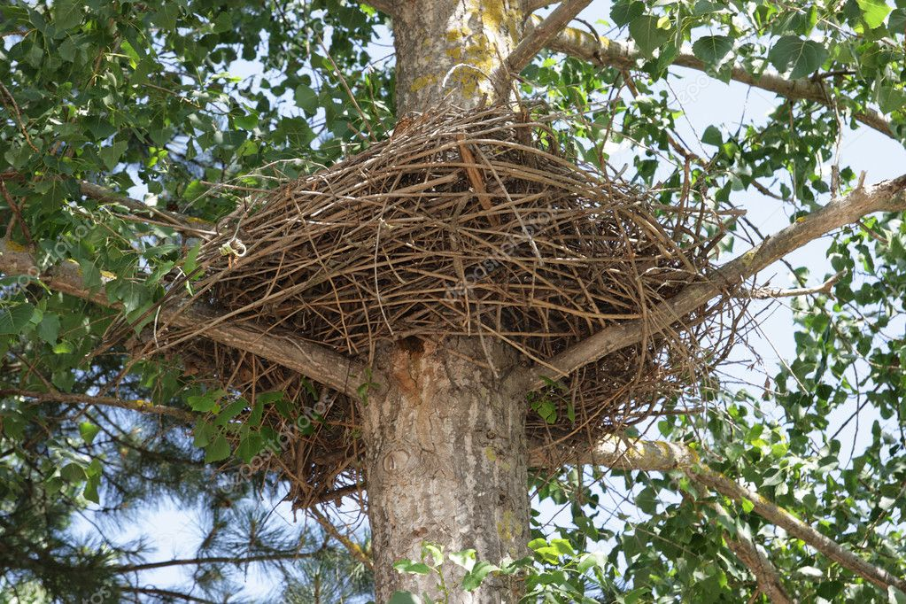 Nest of a large bird twisted round a tree trunk — Stock Photo #2051543