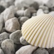 Stock Photo: Shell