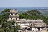 Palenque — Stock Photo