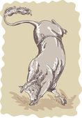 Bucking bull — Stock Photo