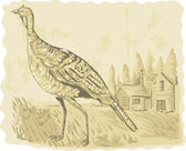 Wild turkey with house in the background — Stock Photo